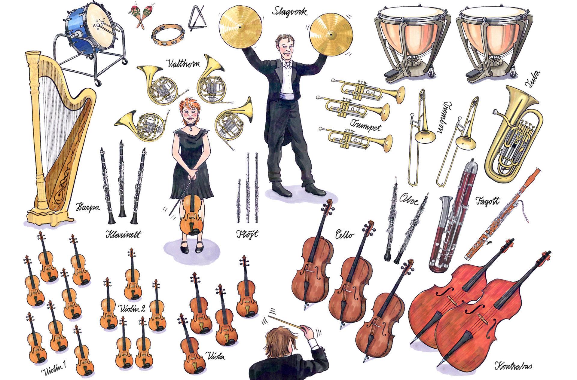 Картинки с инструментами симфонического оркестра